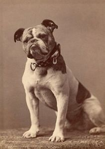 Original_Handsome_Dan_Yale's_mascot